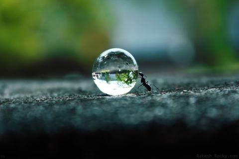 ants dream