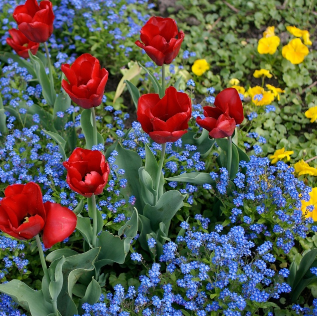 red tulips turquoise flowers